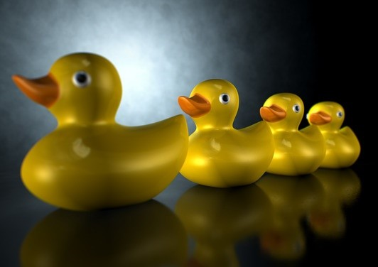 A row of organised and ready yellow rubber bath duck toys on an isolated dark background